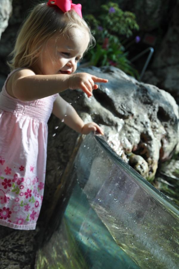 Trip to Tennessee Aquarium